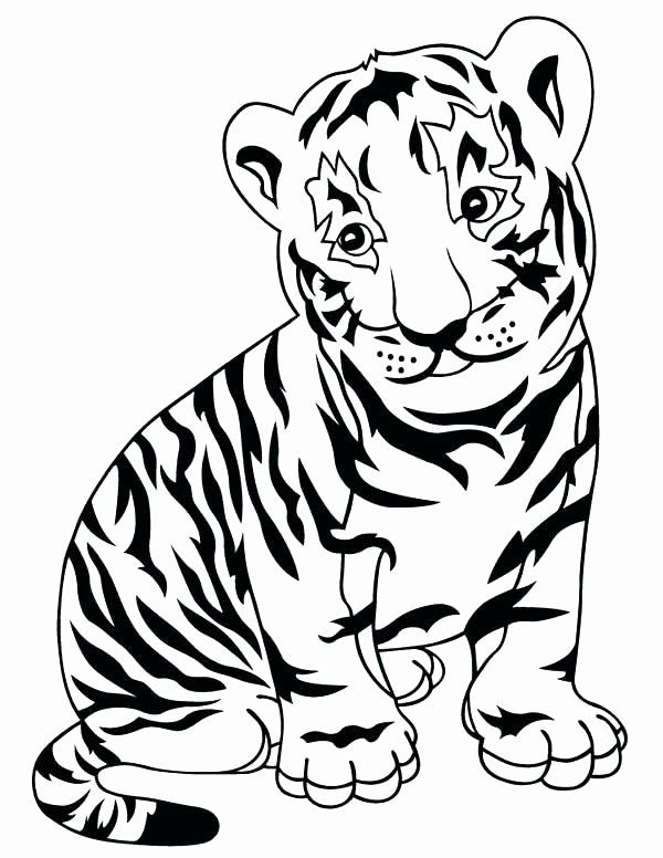 Saber Tooth Tiger Coloring Page Inspirational Saber Tooth Tiger Coloring Page At Getcolorings In 2020 Zoo Coloring Pages Shark Coloring Pages Animal Coloring Pages