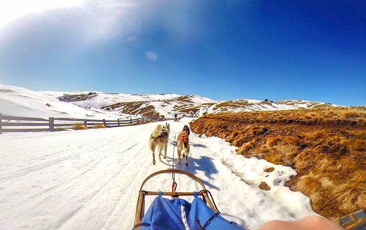 Dog Sledding through the Cardrona Valley