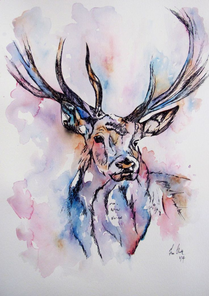 Colourful Deer Illustration Watercolor Painting By Fiona