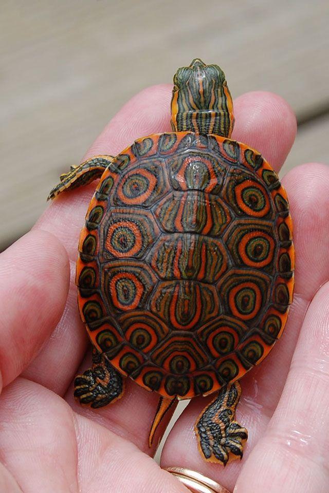 Pretty shell
