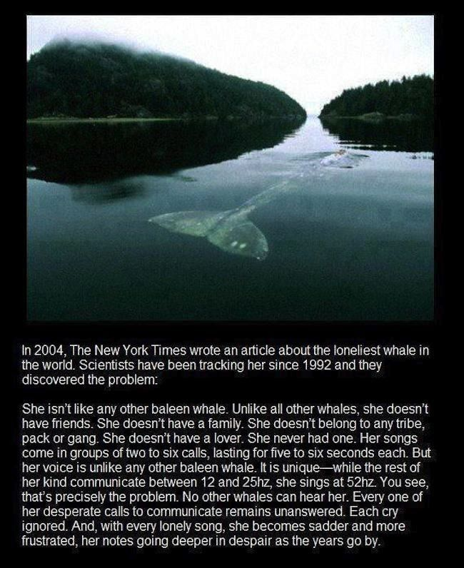 The loneliest whale in the world has no family, no friends and no lover. And it's sad as to why. You see, most whales communicate between 12 and 25hz. This whale? She sings at 52hz. Singing at that frequency means no other whales can hear her. 52 hertz is just higher than the lowest note […]