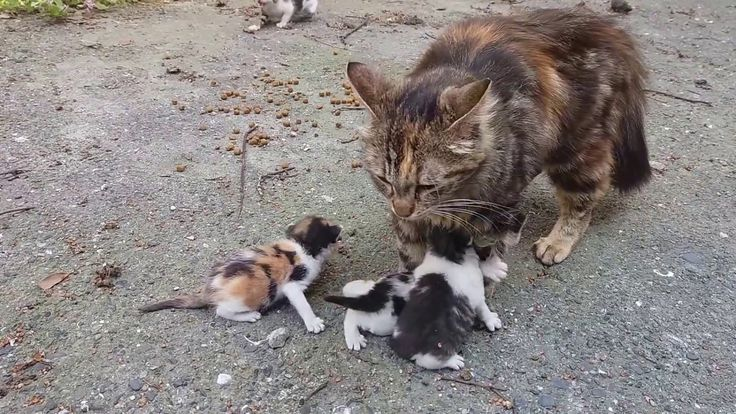 Baby kittens meowing very loudly for mom cat YouTube