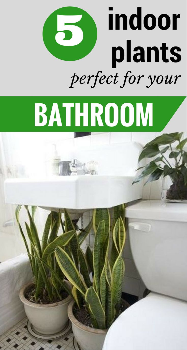 1000 ideas about bathroom plants on plants in