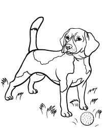 cute beagle dog coloring pages - photo#10