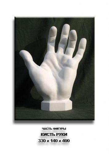"""Гипсовая модель учебная """" Кисть руки Аполона """", гипсовые модели цена, купить…"""