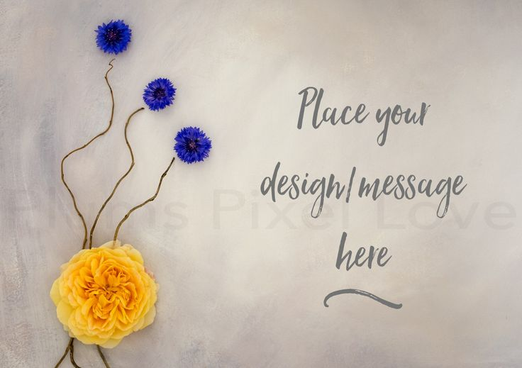 Styled Stock Photography mock up, instagram, Overlay text, nursery, yellow rose, blue flowers, digital image, copy space, feminine SSP74 by plumspixellove on Etsy