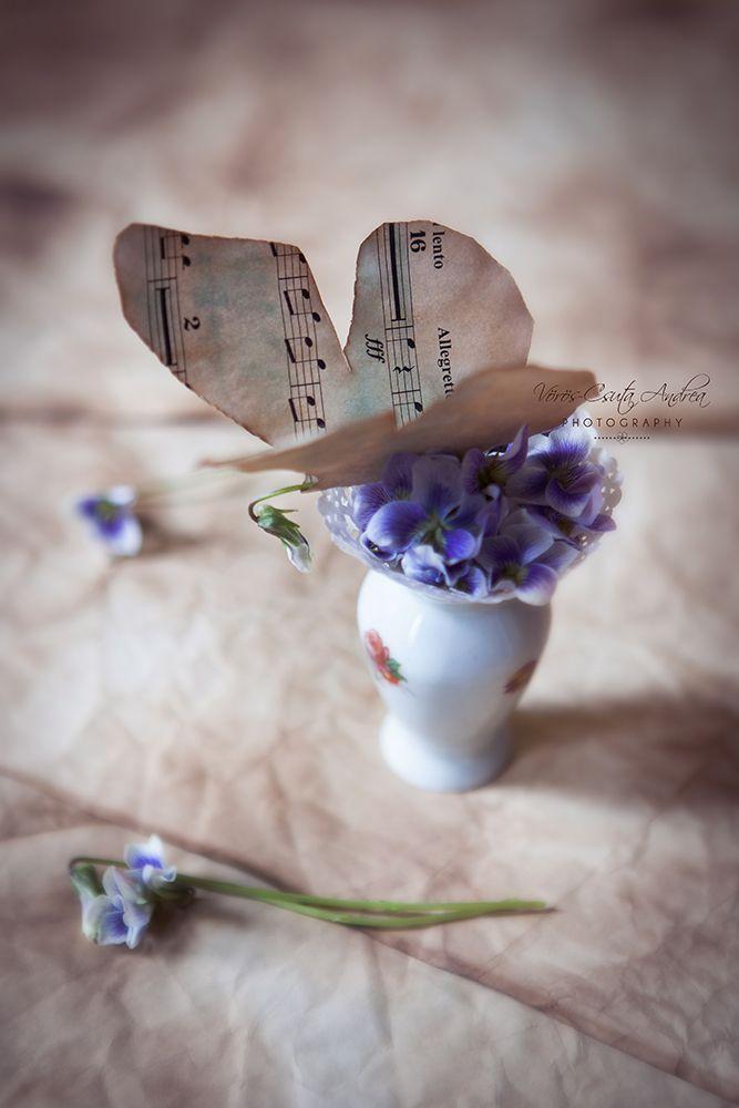 purple, violet, vintage, music sheet, csutafoto, butterfly