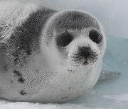 Please sign this petition to boycott Canadian Seafood. Every year thousands of newborn - baby seals are slaughtered for profit from their fur. Please stop this vicious act by telling Canada what's up! Click on the pin link to be taken to the HSUS website. Take action today, the seal hunt starts up again in March. Re-pin! Start AWARENESS.