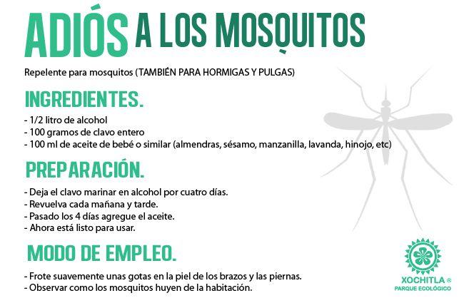 17 mejores ideas sobre remedios contra hormigas en for Como acabar con las hormigas del jardin