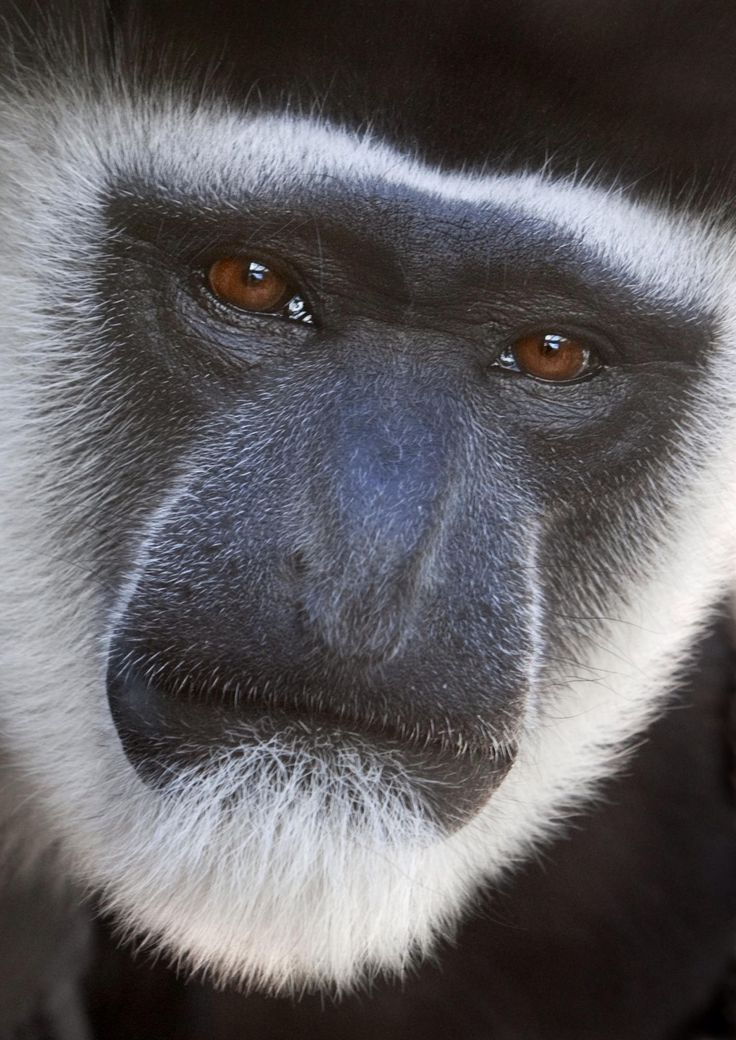 24 Best Monkey Facts. - Random Facts
