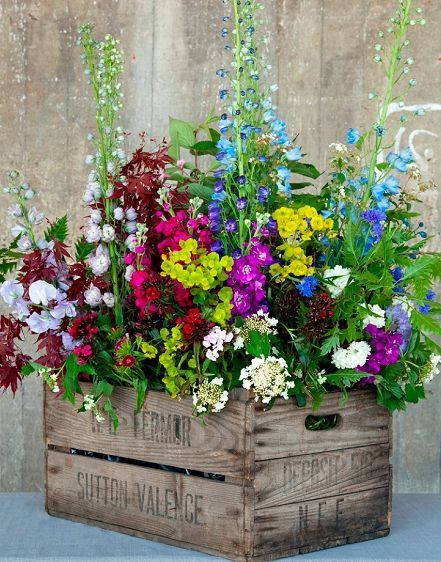 Cottage garden flowers fill a vintage wooden crate | delphiniums with viburnum, stocks, euphorbia, sweet williams...