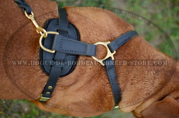If I had a Dogue de Bordeaux, I would probably buy this harness