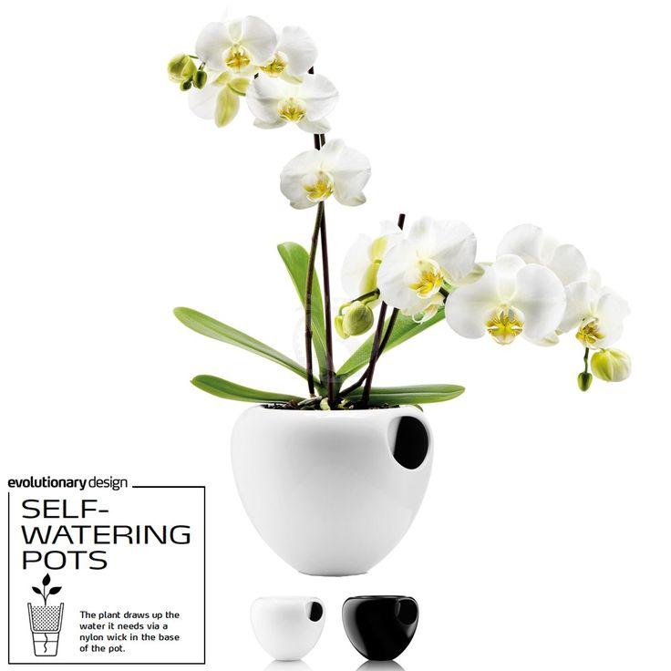Design Premiado - Vaso com Auto-Rega: EVA SOLO SELF-WATERING ORCHID POT - cor: BRANCO (Orquídea NÃO incluída)                                                                                                                                                                                 Mais