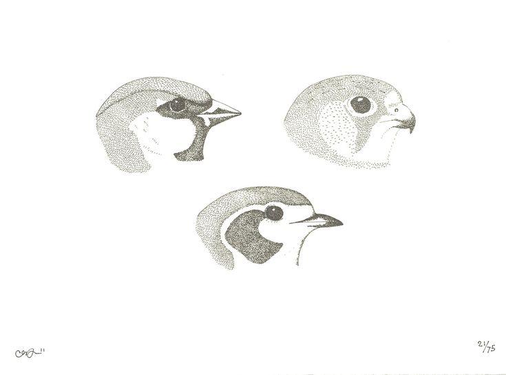 Three Beaks | Hello Polly