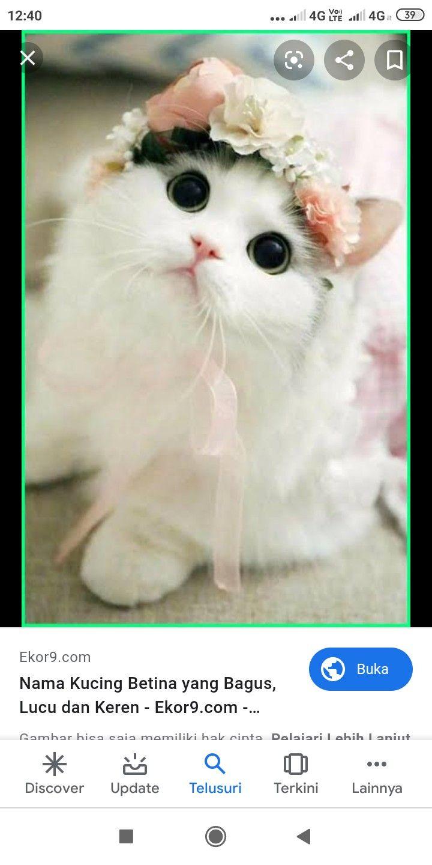Nama Kucing Perempuan Yang Bagus Dan Lucu - Gambar ...