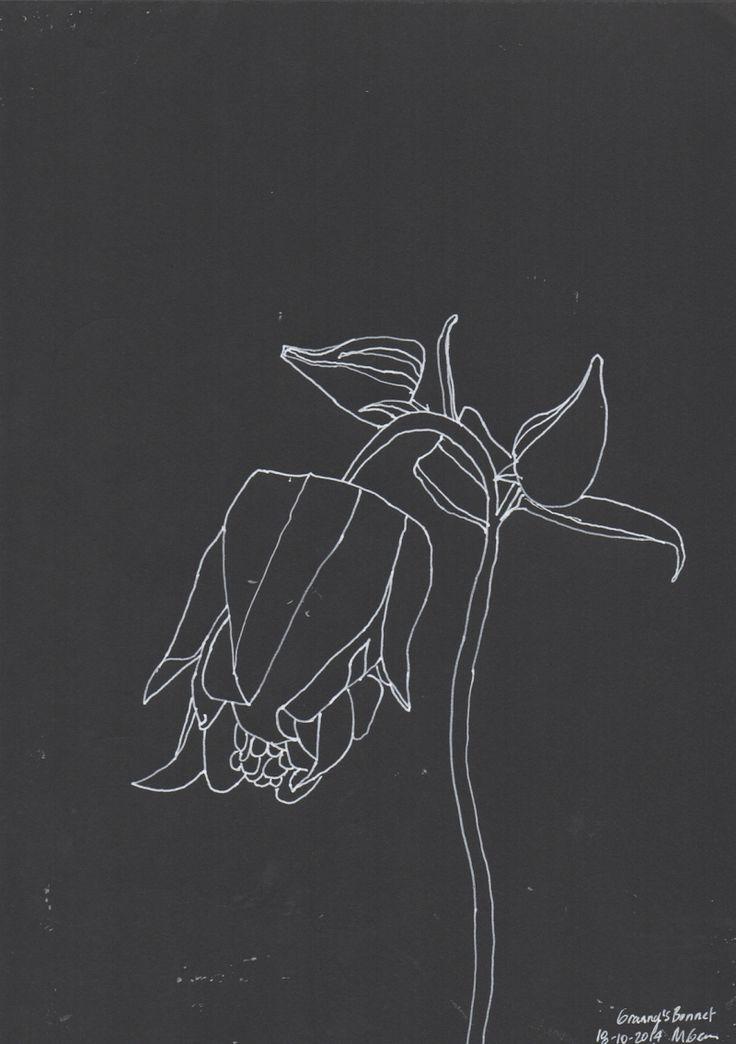 Granny's Bonnet (Columbine), line drawing, Marita Green