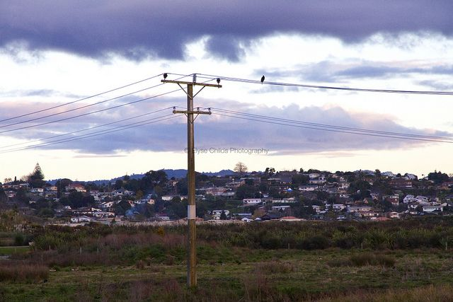 Bird on a wire | © Elyse Childs Photography