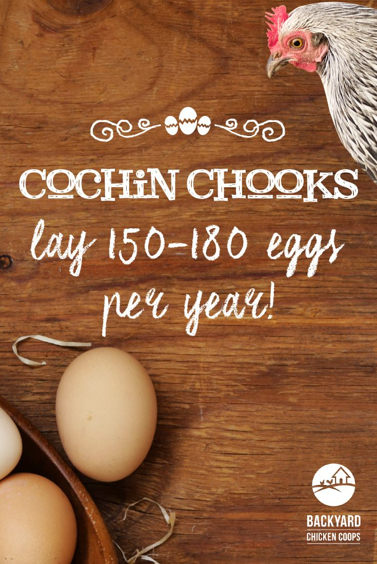 24 best cochin chickens images on pinterest cochin chickens