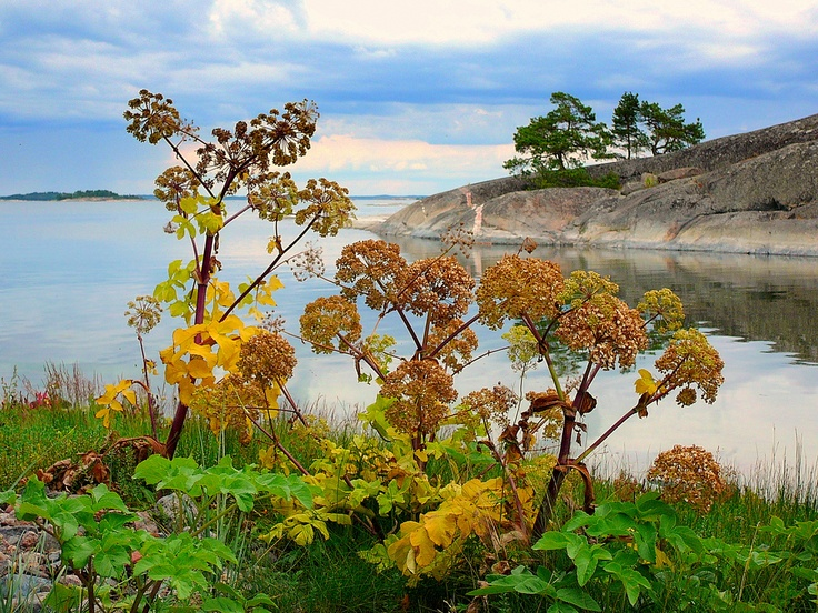A View in the Finnish Archipelago. photo by Tapio Hurme