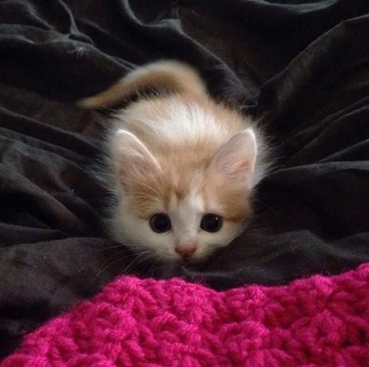 Que fofos! 20 gatinhos que você vai querer levar para casa!