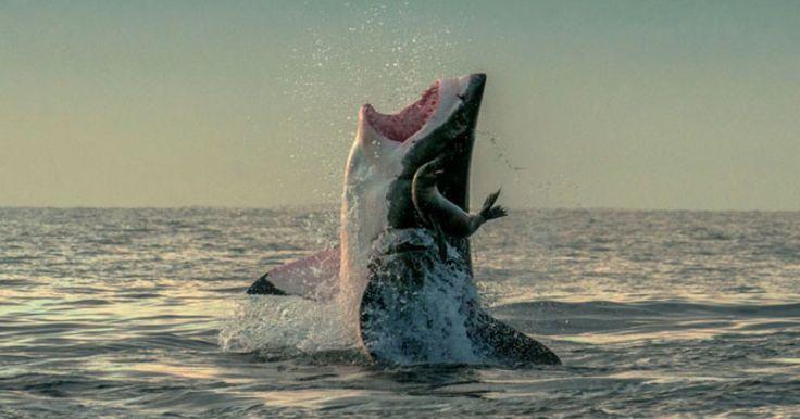 Lista reúne presas escapando por um triz  de ataques de tubarões