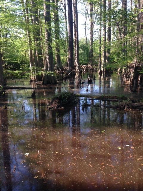 Tar River from the raised walk in Rocky Mount, North Carolina