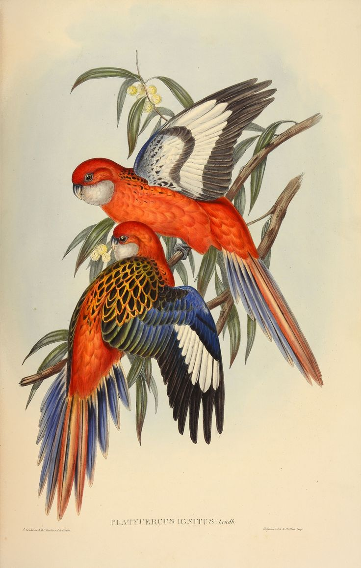 Rare set of John Gould's bird books for sale – in pictures   Art and design   The Guardian