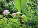HGTV Gardens – Design Ideas, Expert Tips and Gardening Community : HGTV Gardens
