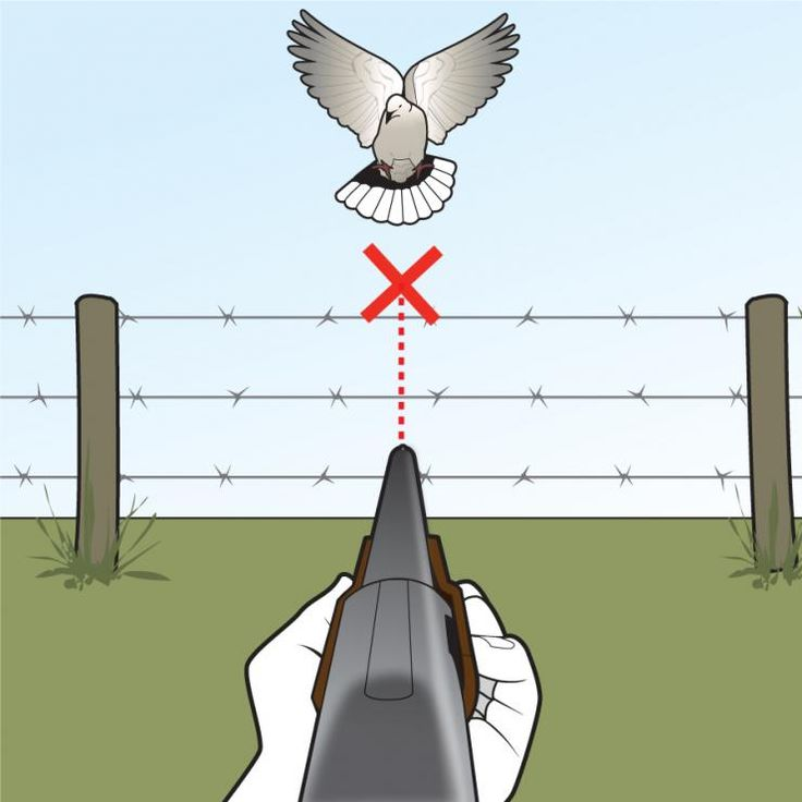 Follow this pro shotgunner's advice, and you'll never miss another dove again (well, almost never)