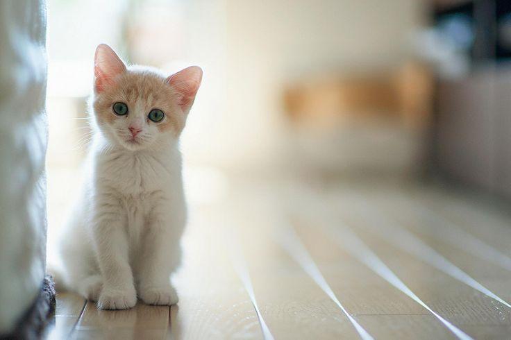 gituaja.com - nih alasan kalo mau melihara kucing (6)