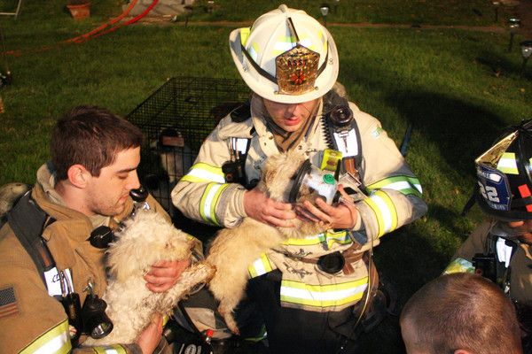 Firefighters save 22 dogs from a house fire in NJ.    Playing an integral role in saving many of the animals who were overcome by smoke after being trapped in the burning home for as much as a half-hour were three oxygen masks specially designed to fit pets. The masks were donated earlier this year by the Humane Society's New Jersey chapter to Lawrence Road Fire Co.