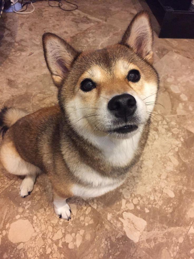 Good girl begging for food Eyebleach Puppy care, Cute