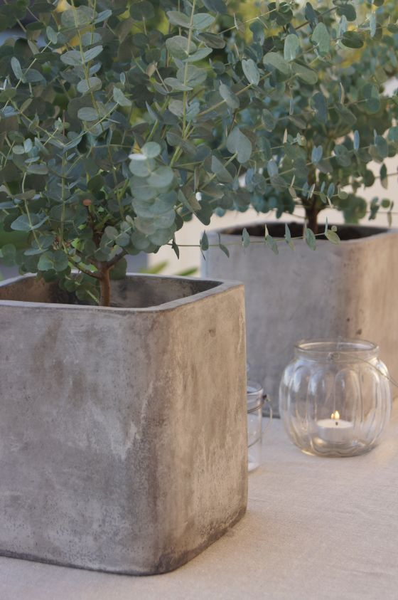 pretty square concrete planters - use square buckets as molds?