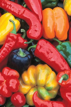 Capsicum Seven Colour Mix Capsicum annuum A rainbow collection of heirloom sweet capsicums including Sweet Chocolate, Purple Beauty, White D...