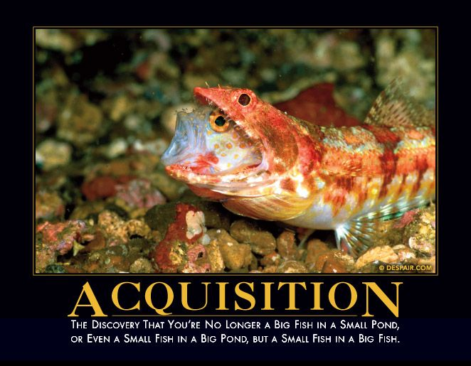 Acquisition the discovery that you 39 re no longer a big for Small pond fish
