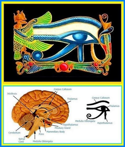 Pineal Gland = Egyptian Eye of Horus hint hint