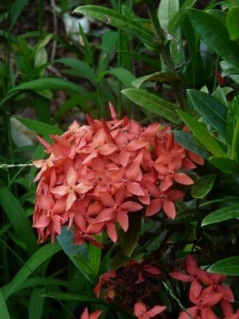 1000 id es sur le th me feuilles persistantes sur for Plante tropicale exterieur