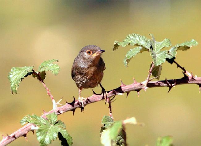 Bien qu'elle soit utile au jardin pour les espèces environnantes et les oiseaux il est parfois nécessaire de se débarrasser des ronces. Hubert Fontaine vous ...