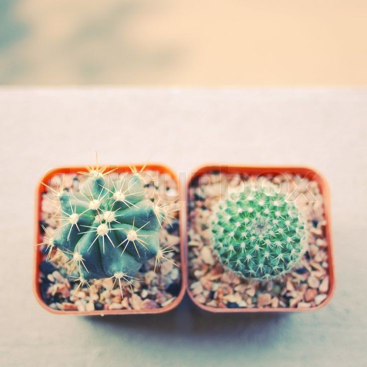 Stock image of 'Various of cactus for decorated with retro filter effect '