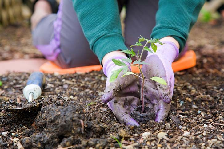 When is it warm enough to plant?  Knowing about the temperature at which your edible plants grow is as important as knowing the other needs ...