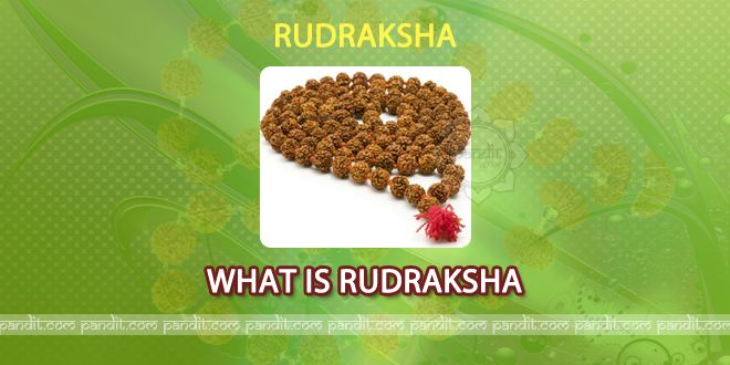 What is Rudraksha and its real Story by Rahul Kaushal Astrologer -------------------------------------------------------- Rudraksh according to holy books is another image of Lord Shiva. It is used in wearing chains and is also used as an element for different ailments. It has been said that by doing puja of this Rudraksh at home always pleases Goddess Lakshmi ji.  http://www.pandit.com/what-is-rudraksha-and-its-real-story/