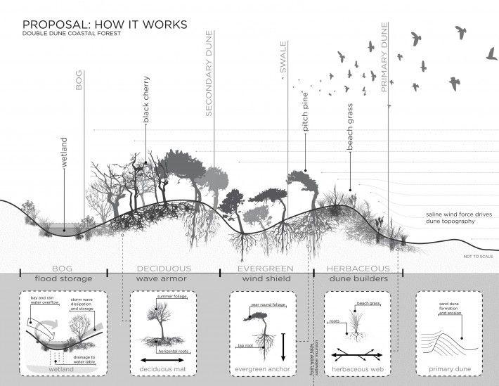 Rockaway East Resiliency Preserve | Local Office Landscape
