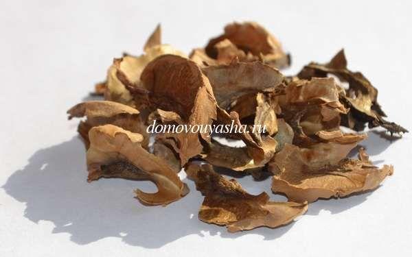Лечебные свойства перегородок грецкого ореха, лечение. Рецепты настоек и отваров. Перегородки грецких орехов противопоказания.