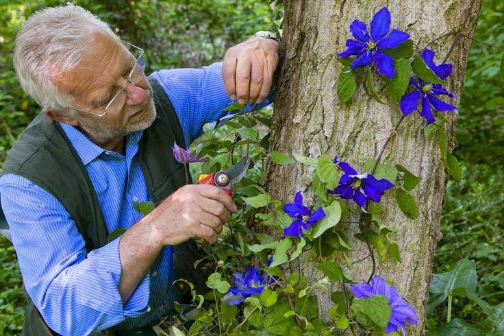 """Orti Fioriti a Corciano. Domenica arriva Carlo Pagani. Lo scrittore e """"sperimentatore del verde"""" presenterà il suo nuovo libro """"C'è gente in giardino. Le piccole storie verdi del maestro giardiniere"""""""