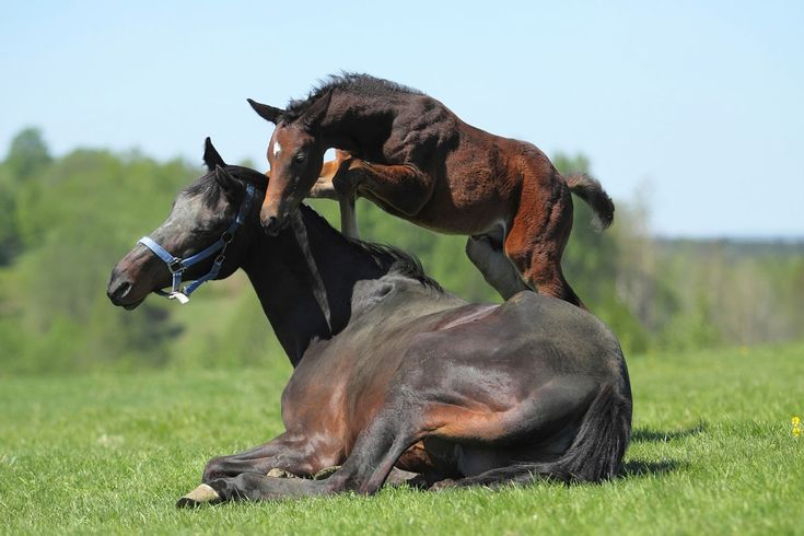 48 best images about for the pony clubbers on pinterest