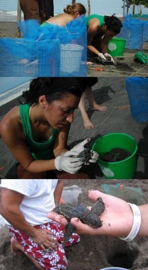 Reclutamiento de Voluntarios para el Servicio de las Áreas Protegidas - http://desktopcostarica.com/articulos/reclutamiento-de-voluntarios-para-el-servicio-de-las-areas-protegidas: The Service, Service, Reclutamiento De, For, Costa Rica, Of The, Q3 Context