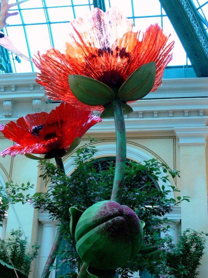 Chihuly Poppies at Bellagio, Las Vegas, Nevada, USA