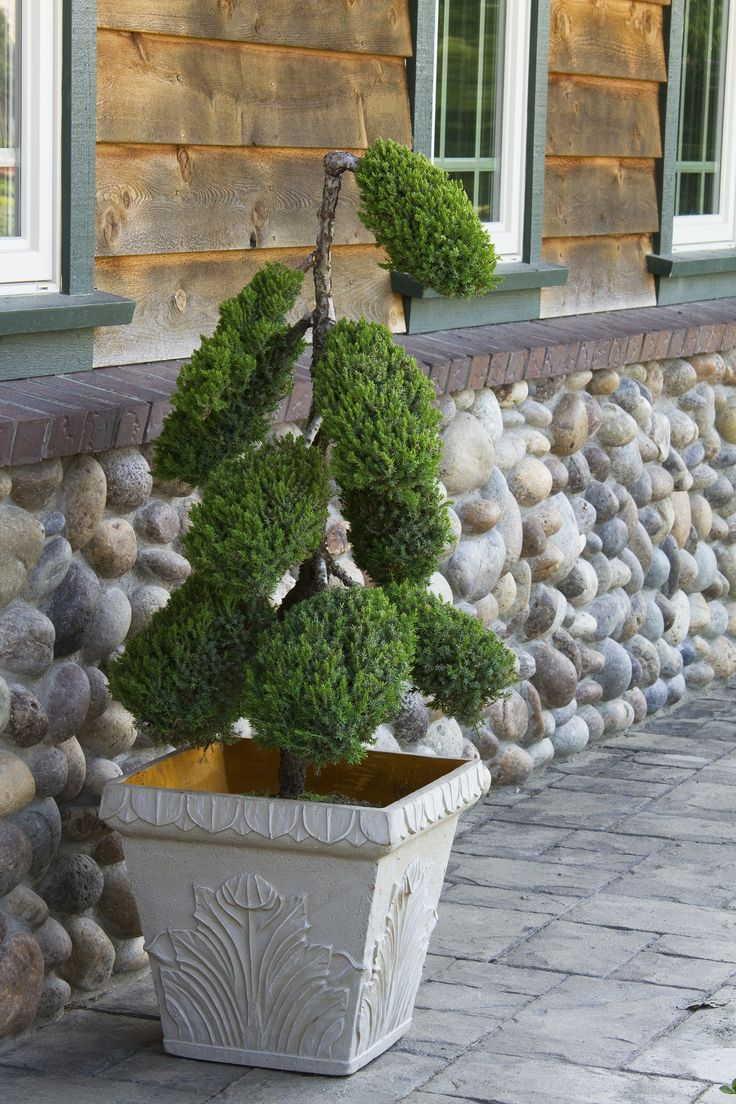 1000 images about topiaries on pinterest hedges water for Japanese water feature for sale