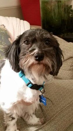 Adoption, Dogs and North carolina on Pinterest