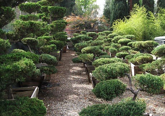 San Fernando Valley Bonsai Nursery